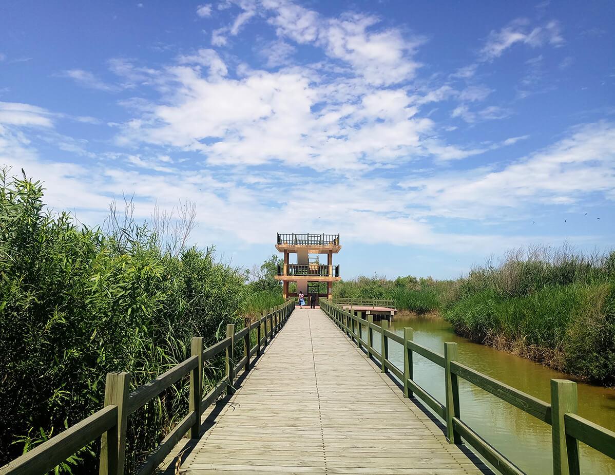 黃河故道天然柳林木棧道