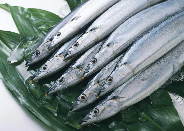 黄河口刀鱼