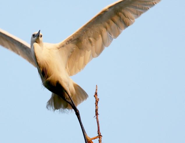 鳥類の科学普及園