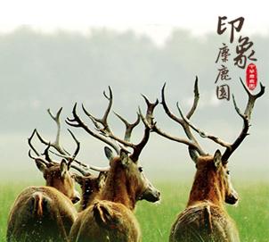 江苏大丰麋鹿国家级自然保护区